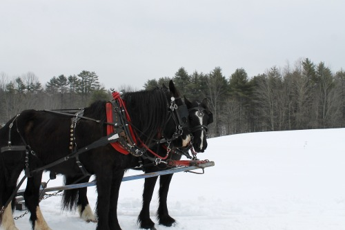 horsesupclose.jpg